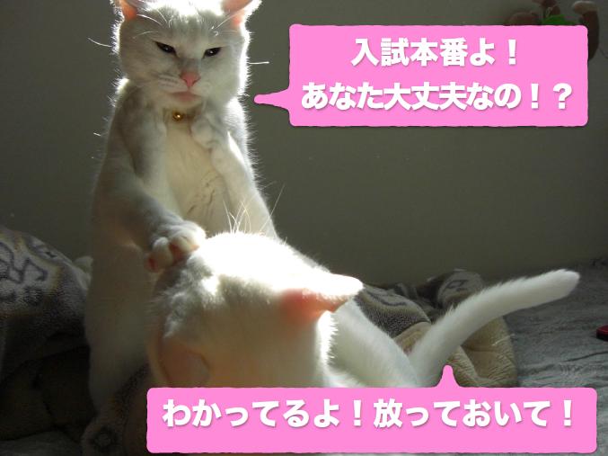 受験_親子COM .PNG